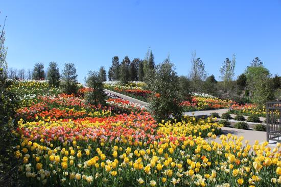spring bulb display at tulsa botanic garden - Tulsa Botanic Garden