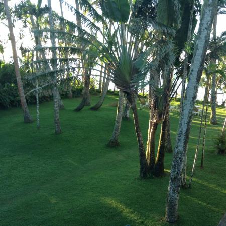 Fiji Palms Pacific Harbour