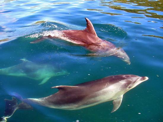The Lodge at Te Rawa: Dolphins