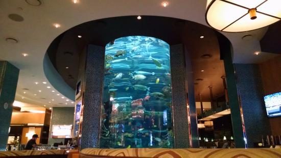 Golden Nugget Hotel Shark Tank Aquarium Outside Of Restaurant