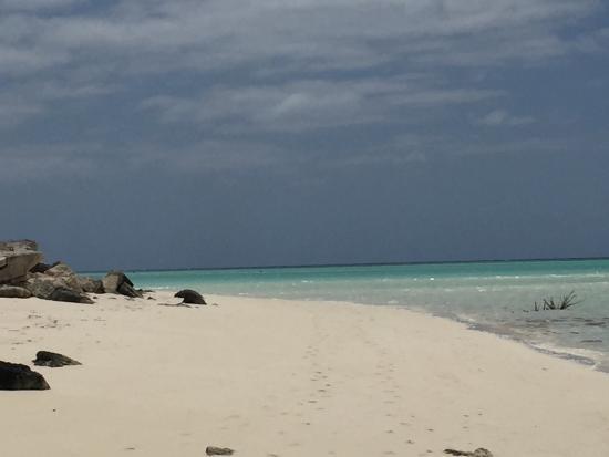 Foto de Parrot Cay