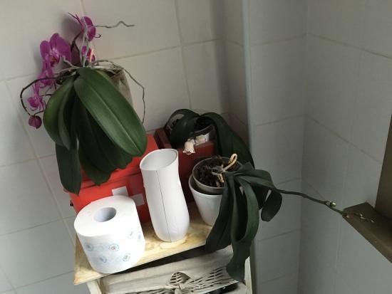 Domus Valeria: Pflanzen vergammeln nicht nur auf der Dachterrasse