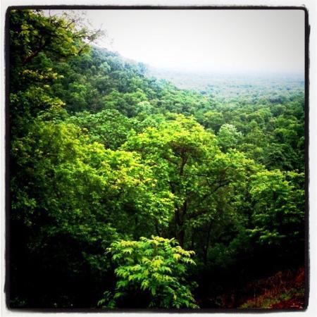 Kuno-Palpur Wildlife Sanctuary - Sheopur - Aktuelle 2018 ...