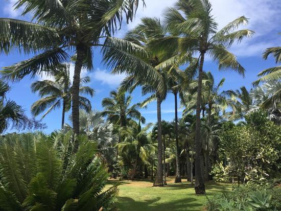 Kilauea, Hawái: photo1.jpg