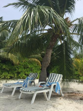 Velidhu Island Resort: Kleine Strandbuchten, viele Palmen