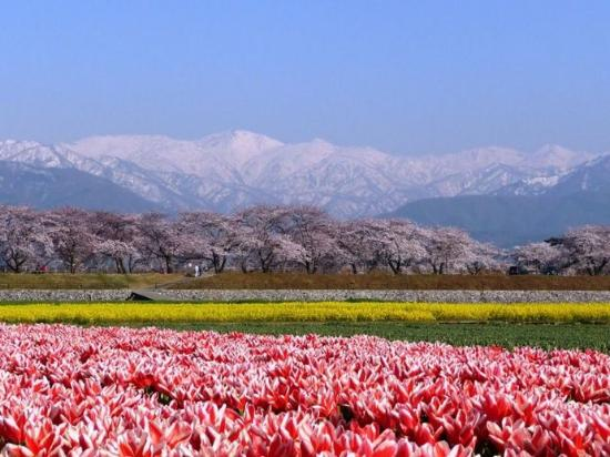 Foto de Asahi-machi