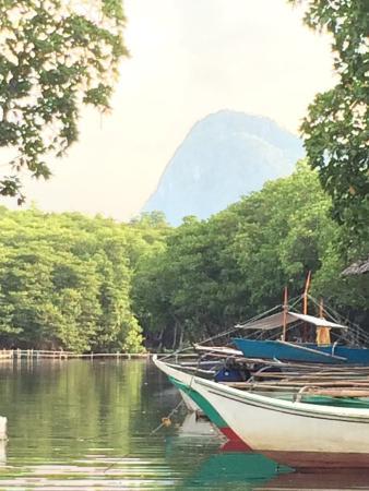 Mystic Mangrove Adventure