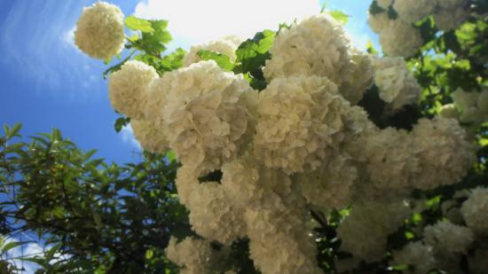 Mourjou, France : Fleurs du jardin 2016