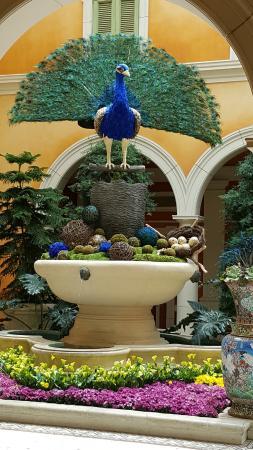 Bellagio Las Vegas: Peacock Behind Front Desk