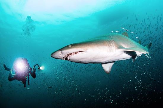 Порт-Элизабет, Южная Африка: Pro Dive Centre