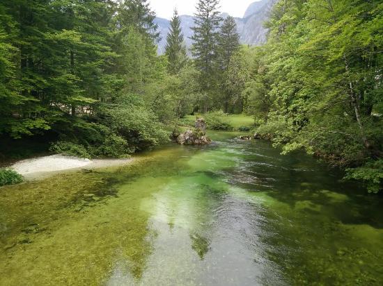 Bohinjsko Jezero, Slovenya: Rivière à truites à 250m