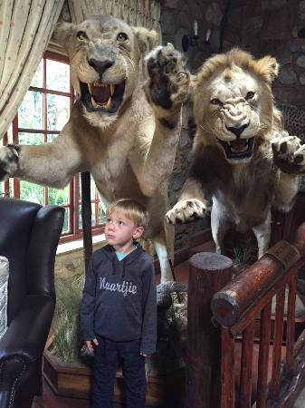 The Farm Inn: Lions in the lobby