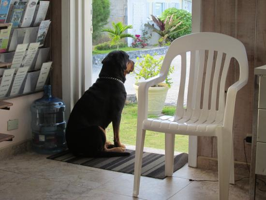 Lofty Fig Villas: Waiting to greet you.