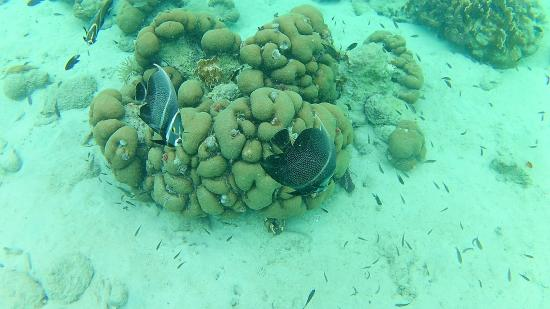 Kralendijk, Bonaire: Lots of sea life around this one coral. Yes, the water & fish are this amazing here!!!