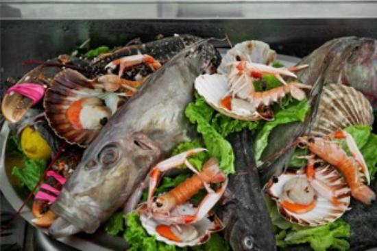 Mandra novigrad restaurant bewertungen telefonnummer for Daily fresh fish