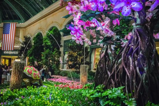 Bellagio Gardens Picture Of Conservatory Botanical