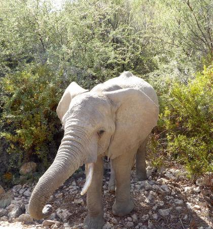Inverdoorn Game Reserve: Local wildlife