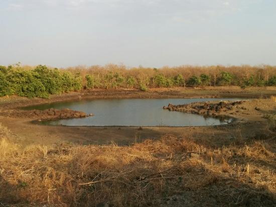 Yavatmal, India: Tipeshwar_large.jpg