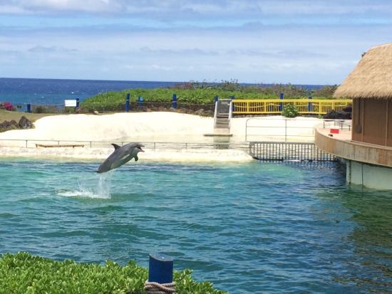 Sea Life Park Hawaii: Wonderful view