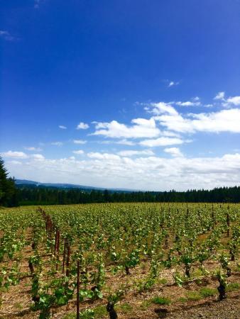 Cornelius, OR: Ardiri Winery and Vineyards