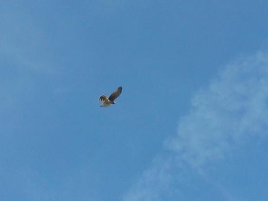 Washougal, WA: Bird