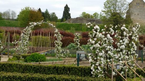 Helmsley, UK: White blossom arch.