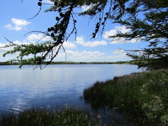 Llanddeusant, UK: Llyn Alaw reservoir, 5 mins walk from Lucys nest