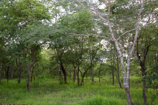Angalia Tented Camp: Vistas desde mi terraza.