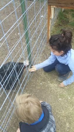 Reindeer Farm: 0508161422a_large.jpg