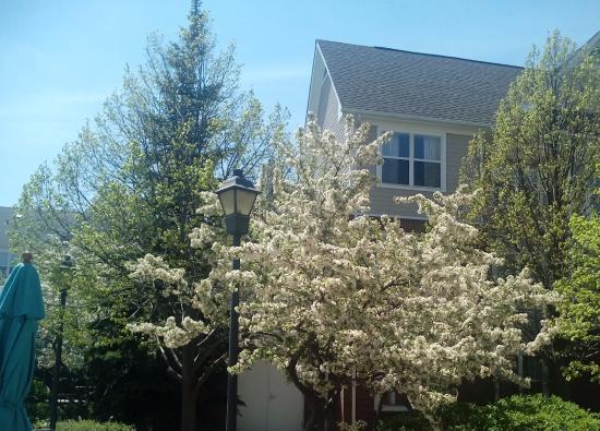 Foto de Residence Inn Chicago Waukegan/Gurnee