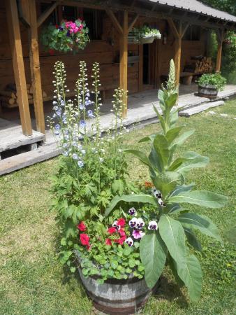 Hope Valley, CA: nice planters