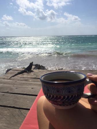 La Posada del Sol: Morning visitors