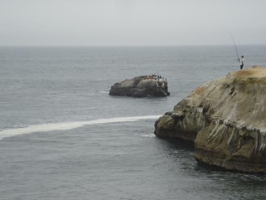 Mark Abbot Memorial Lighthouse : The sealions is lying on the cliff outside.