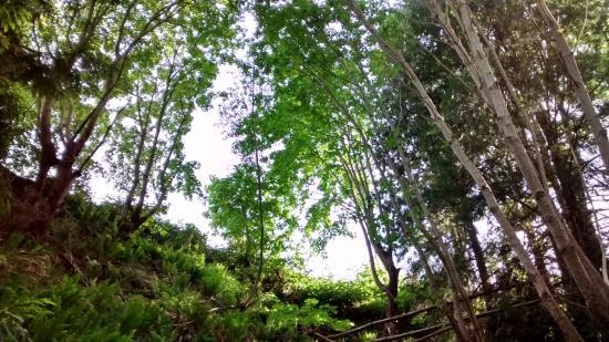 Nanaimo, Canadá: 森の木漏れ陽