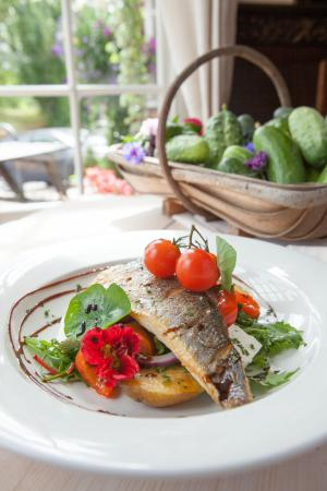 Bottlesford, UK : Sea Bass Salad
