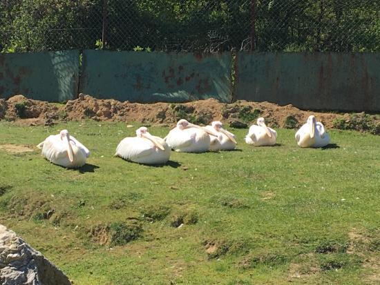 Safari Park : photo3.jpg