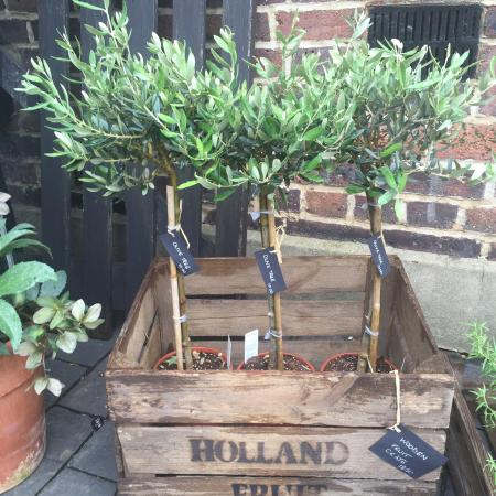 The Courtyard Cafe: Olive trees and fruit crates.