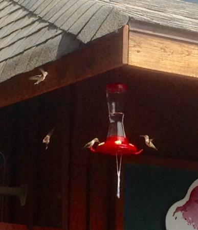 Canyon Hot Springs: Hummingbirds at the office.