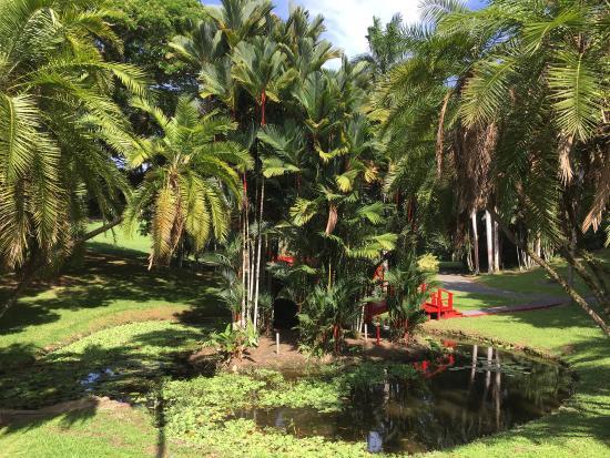 Botanical gardens picture of jardin botanico san juan for Jardin xanadu puerto rico