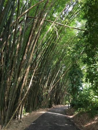 Jardin botanico san juan puerto rico anmeldelser for Jardin botanico san felipe