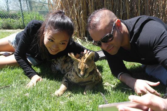 Orono, Καναδάς: Murphy the Serval Cat