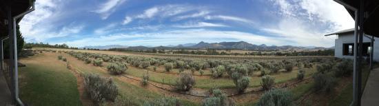 Mount Alford Photo