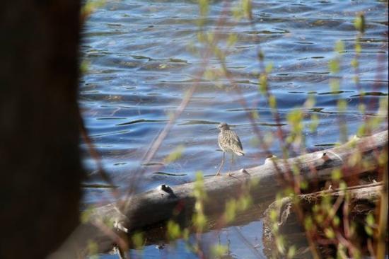 Dease Lake, Kanada: Lots of wildlife around the lake