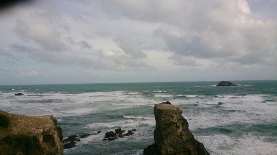 Muriwai Beach, Nueva Zelanda: Muriwai Gannet Colony