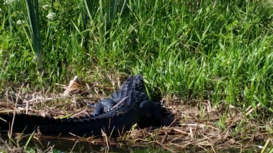 Immokalee, Флорида: ab ins Gebüsch