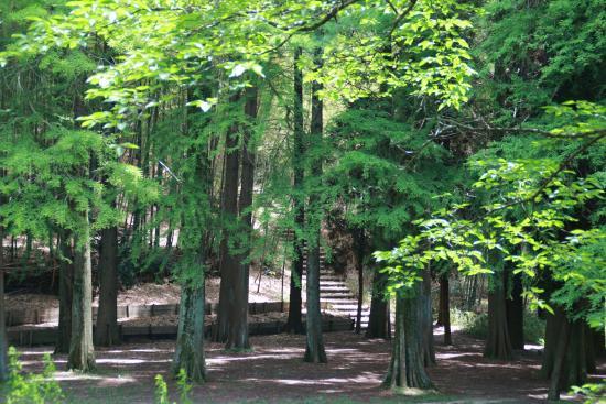 Senri Central Park