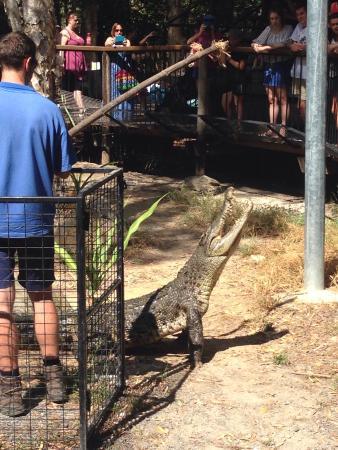 Palm Cove, Australia: photo2.jpg
