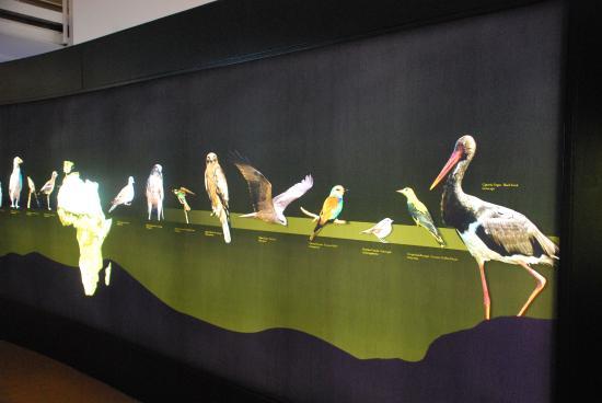 Horcajo De Los Montes, ספרד: Descripción aves migratorias que hay en el Parque Cabañeros
