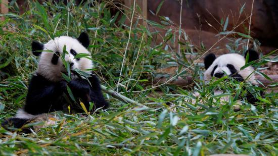 هوموود سويتس أتلانتا - باكهيد: Atlanta Zoo