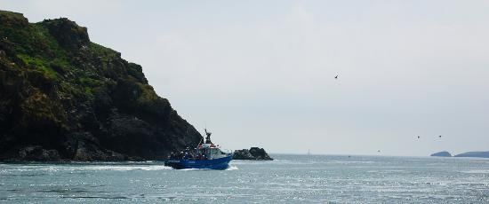 ‪Pembrokeshire Islands Boat Trips‬